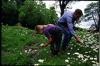 Grandfather and daughter pick flowers for a bouquet from Grandma on the farm in central Indiana.