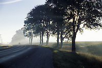 Misty Morning on Southwestern Ontario Highway