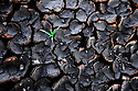 Grass breaks through the dry, cracked earth after the regions first rainstorm in several months in Kakuma refugee Camp, Kakuma, Kenya on January, 2008.  Kenya has declared a national emergency after drought conditions and disruptions to agriculture due to post election violence have left millions in danger of starvation.
