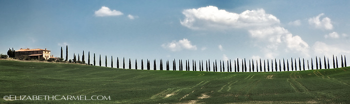 Cypress Lane