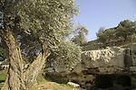Ein Shmuel in Nabi Samuel