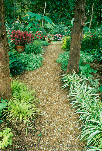 Garden path through forest mother daughter press for Easy upkeep landscaping