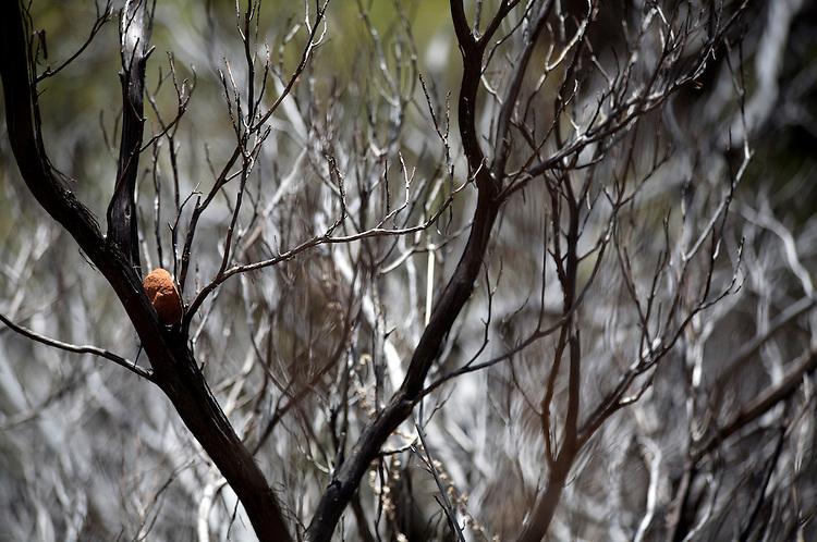 Fallen rock stuck in a tree at Zion National Park . © Carli Davidson