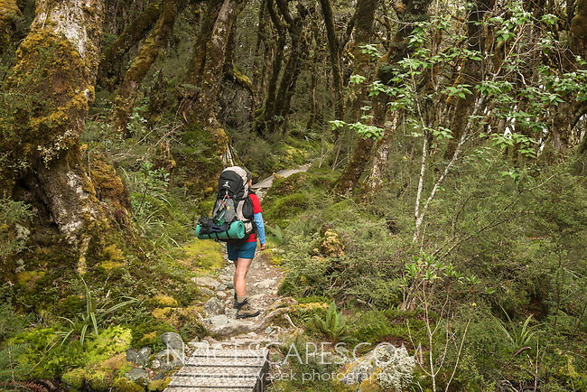 Woman tramper in beech forest near Lake Mackenzie on Routeburn Track, Fiordland National Park, Southland, South Island, World Heritage Area, New Zealand