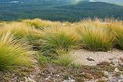 Alpine Natural Communities