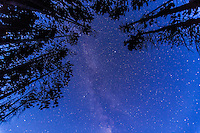 Summer Triangle and summer Milky Way in late twilight sky (no moonlight) through trees. Taken at Herbert Lake, Banff. Exposure was 30 seconds at ISO 2500 with Canon 5D MkII and 16-35mm lens at f/2.8, untracked.