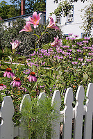 White picket fence and pink perennials in bloom in backyard flowering garden