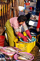 Chagalchi Fish Market, Pusan (Busan), South Korea