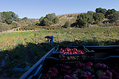 Watsonville, California<br />