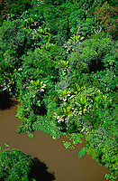 Aerial of floodplain tropical rain forest with small river, Marajo Island, Para, Brazil. Palm with entire leaves is Manicaria saccifera.