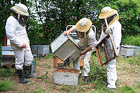 Transfer of a hive.