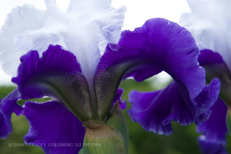 Iris 2015 Selects