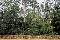 BIALOWIEZA FOREST