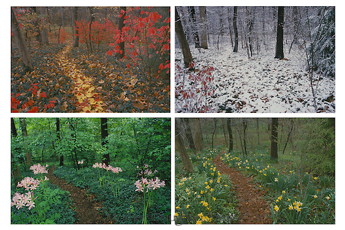 Path through forested yard seen at four separate seasons in four panel series