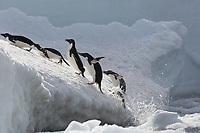 Hope Bay, Antarctic Peninsula