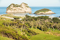 Coastal farmland with Wharariki Beach in background near Collingwood, Nelson Region, South Island, New Zealand