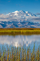 Summit of Mt. McKinley, North America's largest mountain, reflects in a small tundra pond called Reflection Pond, Denali National Park, interior, Alaska.