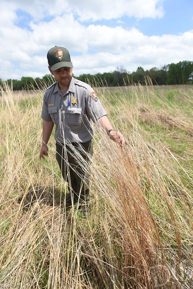 NWA Democrat-Gazette/FLIP PUTTHOFF <br /> Moore looks at       April 2017     a stand of quail-friendly native grass near the visitor center at Pea Ridge National Military Park.
