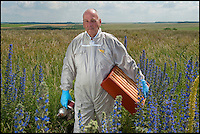 BNPS.co.uk (01202) 558833<br /> Picture: PhilYeomans/BNPS<br /> <br /> Long hot summer a boost for the bee man of Salisbury Plain.<br /> <br /> One of Britains last wilderness area's is a hive of activity this summer as an army of busy bees swarm across Salisbury plain in Wiltshire.<br /> <br /> Major Chris Wilkes commands an astonishing 8 million bees in 150 hives dotted across the unique enviroment of the plain. The chalkland host's an amazingly wide range of rare wildflowers as 60,000 acres of SSSI have never been treated with modern pesticides.<br /> <br /> The wet winter and dry spring have produced perfect conditions for the diverse flora of the grasslands, with the isolation of the plain creating a cornucopia of the top nectar flowers in the UK  producing a honey with the distinctive flavour of one of Britains last wilderness areas.