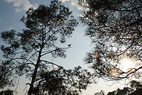 a vulture perches on a tree during a walk in Cuatepetitla with Annuska, Felix and Lucas in San Jose los Laureles, Tlayacapan, Mexico