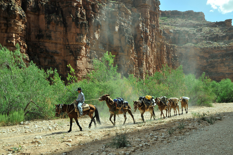 Arizona, Hualapai Canyon, Havasupai Nation.  Reservation, Grand Canyon region, Trail to Supai, Havasu Falls, Havasupai Trail, riders on horseback