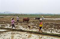 Asie/Vietnam/env d'Hanoi/Mao Khe: Travail dans les Riziéres - femmes arrosant et labours avec buffle