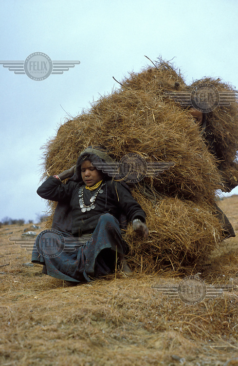 Young girls lifting their loads of pine needles gathered for use as bedding for cattle.