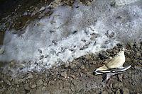 Il Parco Naturale Regionale Molentargius - Saline viene istituito nel 1999..Il parco Molentargius, ha un ecosistema ottimale per la sosta e lo svernamento di uccelli nidificanti e di passo, molte specie sono protette a livello comunitario..The Regional Natural Park Molentargius - Saline was established in 1999 .Molentargius the park has an ideal ecosystem for the staging and wintering birds and breeding step, many species are protected at Community level..Uccelli morti dopo aver urtato i fili dell'alta tensione..Birds died after having struck the high tension wires...