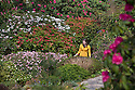 2016_05_07_lea_gardens_rhododendrons