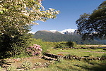 Chile, Lake Country: Flowering spring scene at Hotel Peulla in Peulla...Photo #: ch660-33494..Photo copyright Lee Foster www.fostertravel.com, lee@fostertravel.com, 510-549-2202.