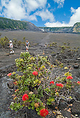 Visitors reach the end of a hiking trail across Kilauea Iki Crater (once a lava lake in 1959) next to Halema'uma'u Crater in Hawai'i Volcanoes National Park. In the foreground is an 'ohi'a bush with red lehua flowers, a favorite of volcano goddess Madame Pele.