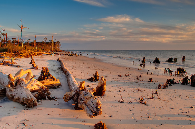 Driftwood and tree stumps on a rural beach on Cape San Blas, Florida.