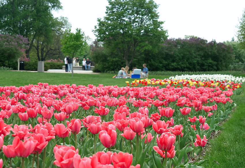 Springtime setting in minneapolis 39 lyndale park near lake harriet kruger images - Rose cultivars garden ...