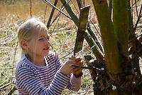 Kinder schneiden, sägen Äste, Zweige von einer Kopfweide, Kopfbaum, Kopfweidenpflege, Kopfweiden, Kopfbäume als Lebensraum für Tiere, Biotoppflege, Grundschulklasse, Schulkinder, Weide, Weiden, Salix, Sallow, Willow, Pollard Willow