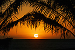 The sun sets between two palm trees off the shores of Kihei, Maui, Hawaii.