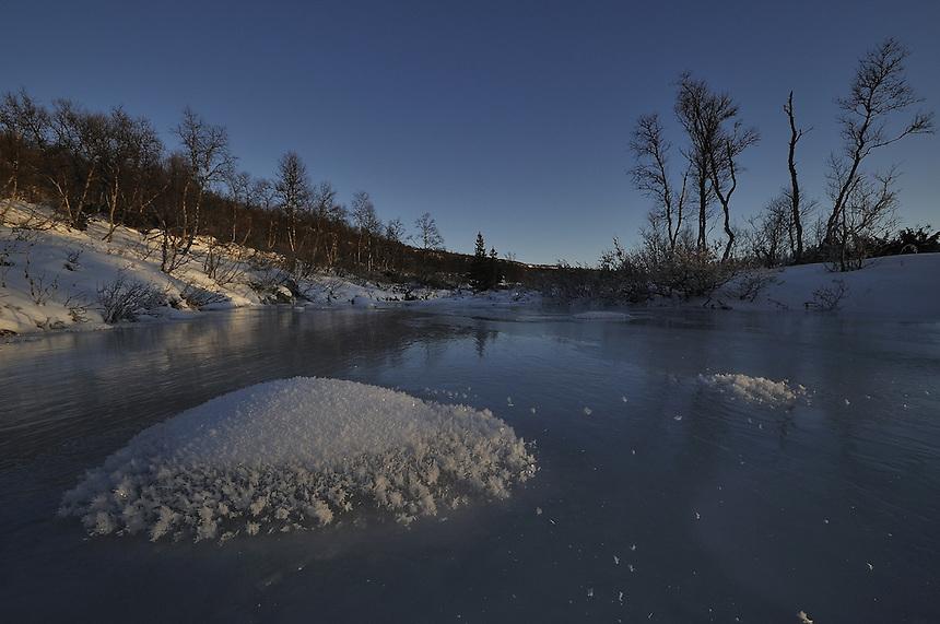 Iceroses on frozen river