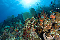 Mayreau Channel Garden<br />