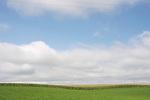 Heartland Wisconsin - Corn