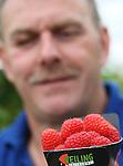 Foto: VidiPhoto<br /> <br /> HAAREN - De relatief nieuwe framboos Kwanza, die wat smaak, grootte, houdbaarheid en kleurvastheid boven alle andere Nederlandse frambozenrassen uitsteekt, is een enorm succes, vertelt fruitteler Ren&eacute; Simons uit het Brabantse Haaren. Als hij de Kwanza moet omschrijven, raakt hij haast niet uitgesproken van enthousiasme. Het zachtfruit is inmiddels zo populair dat de vraag fors groter is dan het aanbod. Dat komt voor een deel ook omdat het plantmateriaal niet makkelijk te vermeerderen is. De Hollandse lekkernij gaat inmiddels de hele wereld over. Om aan de enorme vraag in zowel binnen- als buitenland te kunnen voldoen, zoeken de Nederlandse telers naar mogelijkheden om de Kwanza jaarrond in de schappen van de supermarkten te kunnen krijgen. Daarvoor moeten de drie wintermaanden januari, februari en maart overbrugd worden door telers in het Zuiden van Europa, mogelijk Portugal. Simons is met 4 ha. Kwanza in de kassen en van de koude grond, een van de grootste telers; nadat hij enkele jaren terug als eerste dit nieuwe ras in productie nam. Landelijk verhandelt veiling Zaltbommel de meeste superframbozen.