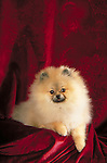 pomeranian in the studio Shopping cart has 3 Tabs:<br />
