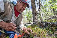 Charles Krebs, professor emeritus, University of British Columbia at Kluane Lake Research Station, Yukon.