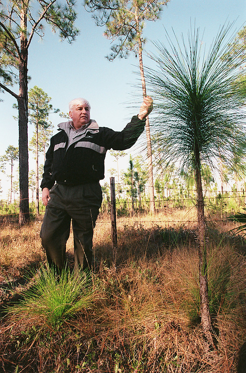 01/05/00.APALACHICOLA NATIONAL FOREST--Congressman Allen Boyd, D-Fla., examines longleaf pine saplings, at his feet and at eye level, in the Apalachicola National Forest..CONGRESSIONAL QUARTERLY PHOTO BY SCOTT J. FERRELL