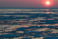 Midnight sun sinks low and paints the floes with pink light.