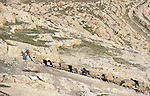 A shepherd leads his flock up a hill near Alqosh, Iraq.