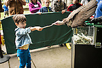 Fedor Hess West donates a dollar to wildlife conservation by handing it to hooded vulture Pierre during the Wild life live show at The Oregon Zoo. © Oregon Zoo / Photo by Carli Davidson