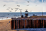 Seagulls at Sunset, Newport Beach, CA.