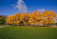 Grove of trees in front of Fleming Museum, Fall