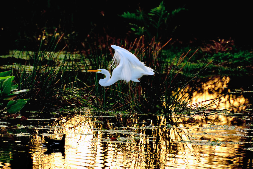 """Amazing wing movement that only a camera can """"see"""""""