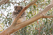 Australian Wildlife Photography and Nature