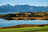 Autumn color at Forggensee lake at dawn with Allgäu Alps mountains rising in distance, Bavaira, Germany